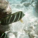 snorkeling09